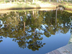 waterforthetrees