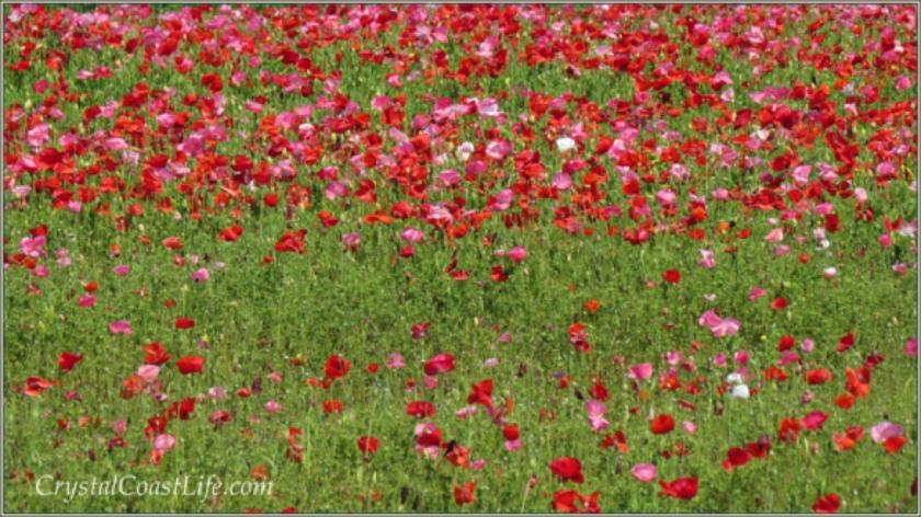 flowerswm1200