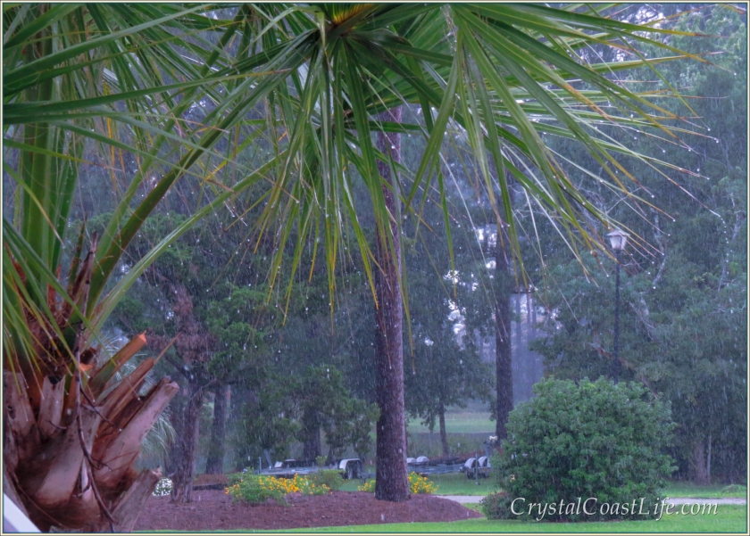 A Palm Tree In A Summer Rainstorm on the Carolina Coast