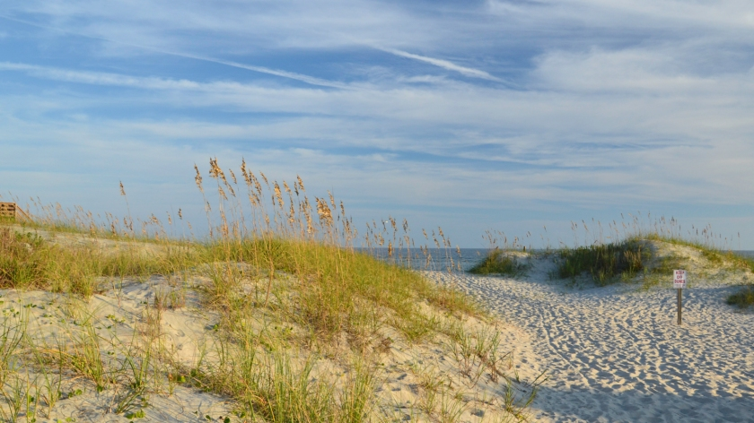 Sea Oats Near The Point