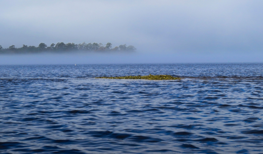 Fog and oyster rocks on the White Oak River