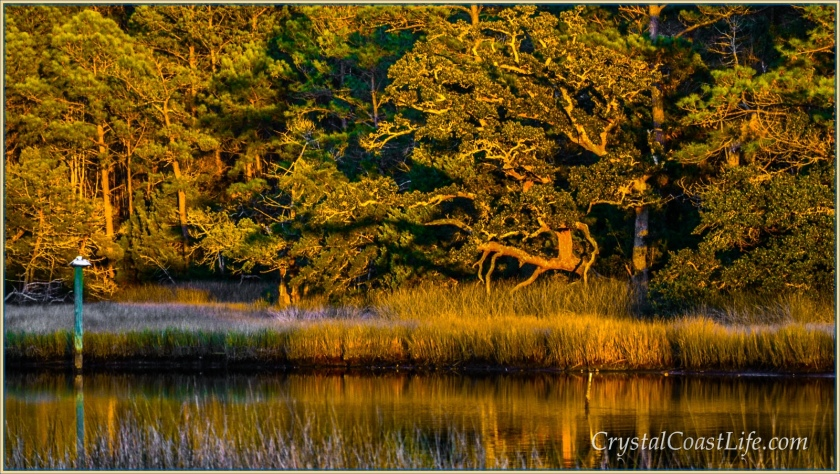 Pelican in evening sunlight, Raymond's Gut
