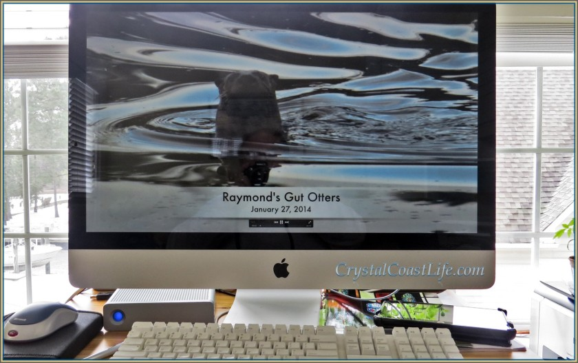 Otter Movie on my iMac