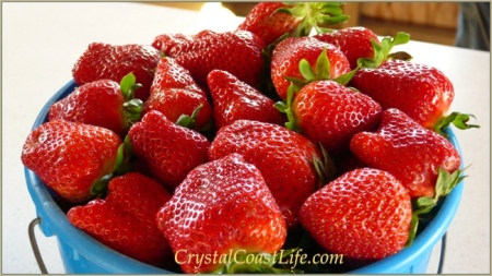 Local Crystal Coast Strawberries