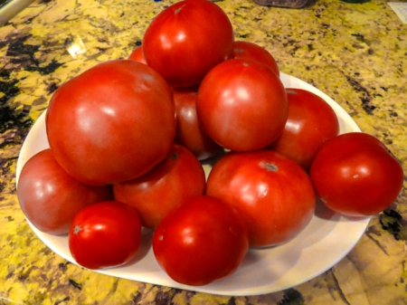 Tomatoes from our 2013 garden