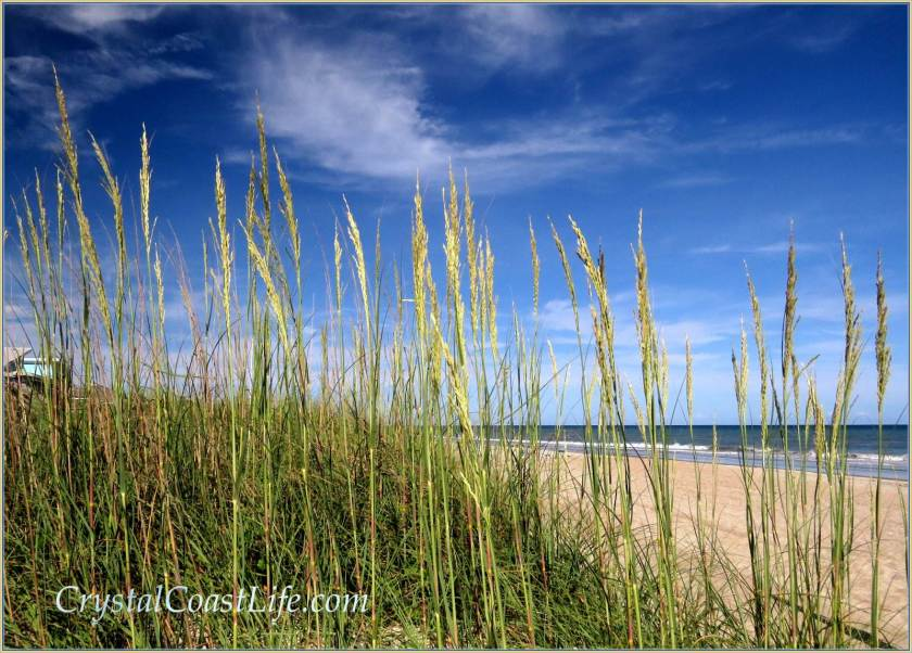Sea Oats, Third St. Beach